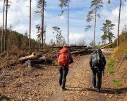Der Wald stirbt – dramatische Bilder, hier auf dem Weg zur Kleinsteinwand